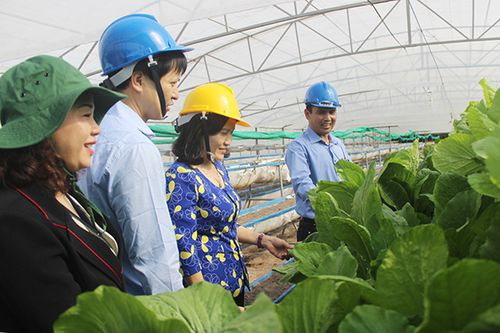 Mơ ước chuỗi nông nghiệp hữu cơ công nghệ cao