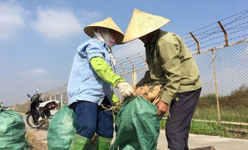 Hà Nội: Nông dân 'đội nắng' xuống đồng đầu Xuân