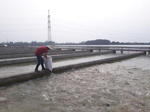 Tạo bước chuyển trong sản xuất nông nghiệp