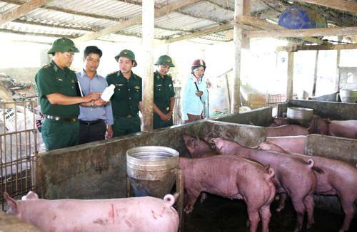 A Lưới nỗ lực ngăn chặn dịch tả lợn châu Phi