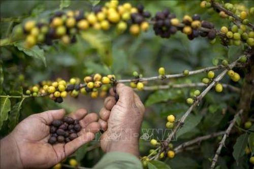 Giới chuyên gia cảnh báo xu hướng lạm dụng hóa chất nông nghiệp tại Brazil