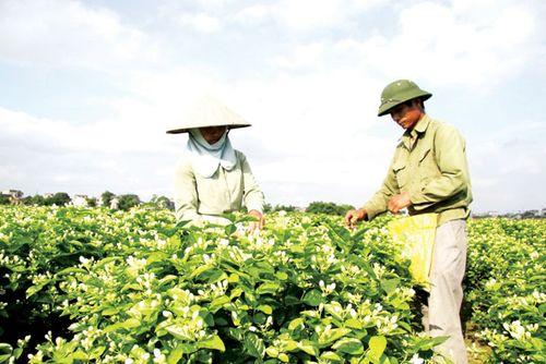 Hỗ trợ nông dân kết nối thị trường tiêu thụ nông sản