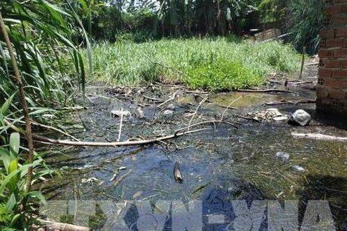 Phản hồi thông tin của TTXVN: Đắk Lắk kiểm tra việc chậm xử lý cơ sở chăn nuôi