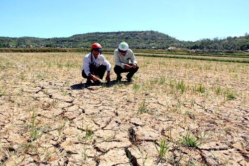 Thiên tai gây nhiều thiệt hại về người và sản xuất nông nghiệp