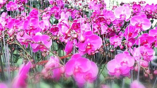 Duyên hoa