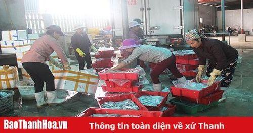 Xã Hải Thanh: Sản lượng khai thác hải sản đạt hơn 6.500 tấn