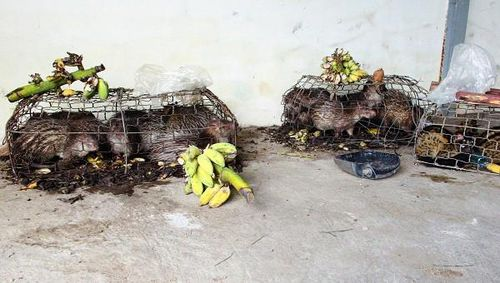Thoát khỏi xe buôn, nhiều động vật hoang dã lại chết dần trong kho hải quan