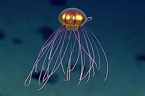 Phát hiện sinh vật lạ như UFO dưới đáy đại dương