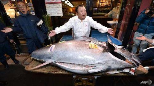 'Vua cá ngừ' chi đậm mua cá ngừ vây xanh trong phiên đấu giá đầu năm
