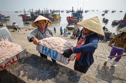 Ước vọng ở làng biển có mật độ dân số cao nhất Việt Nam