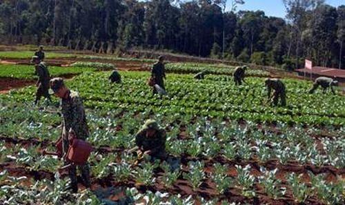 Chủ động nguồn thực phẩm từ tăng gia sản xuất