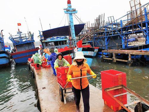 Ngư dân Quảng Nam đón 'lộc biển' đầu năm từ Hoàng Sa