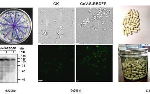 Đại học Thiên Tân chế thành công vaccine dạng uống chống Covid-19