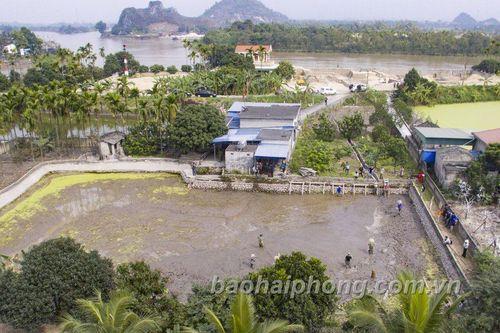 Hải Phòng: Khảo sát, nghiên cứu bãi cọc Đầm Thượng, xã Lại Xuân