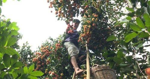 Mở thêm thị trường cho nông sản (*): Sức ép nâng chất lượng
