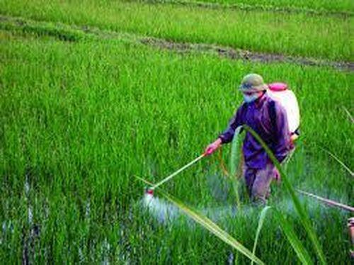 Kiến nghị bỏ thuốc bảo vệ thực vật khỏi Danh mục hàng dự trữ quốc gia