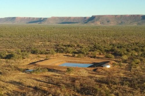 Tập đoàn TH chi 135 triệu USD mua 3 trang trại gia súc ở Australia