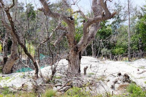 Đề nghị xử lý trách nhiệm đơn vị quản lý rừng và đất rừng