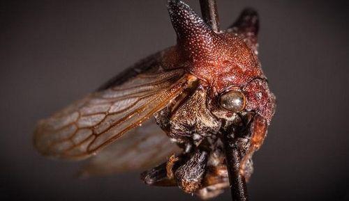 Một loài côn trùng được đặt tên Lady Gaga