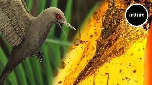 Bạn có biết: loài khủng long nhỏ nhất thế giới kích thước chỉ 5 cm