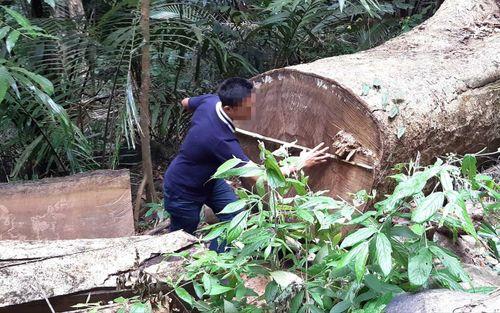 Gia Lai: Khởi tố vụ án hình sự phá rừng phòng hộ đầu nguồn