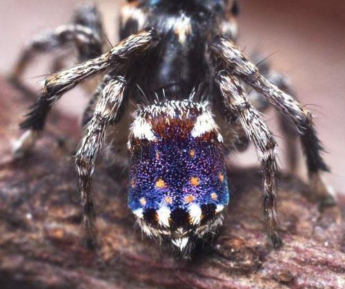 Mới phát hiện loài nhện giống kiệt tác 'Starry Night' của Van Gogh