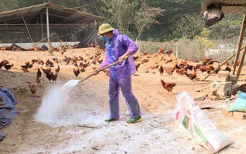 Phát hiện ổ cúm gia cầm H5N6 ở Tuyên Quang