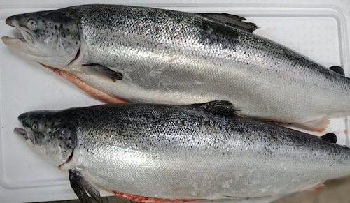 TP Hồ Chí Minh: Cá hồi giảm giá vì ảnh hưởng dịch Covid-19