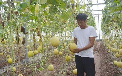 Ứng dụng công nghệ cao tạo diện mạo mới trong sản xuất nông nghiệp