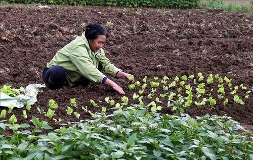 Si Ma Cai biến khó khăn thành lợi thế xây dựng nông thôn mới