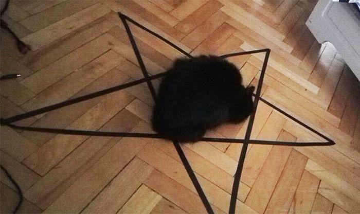 """Chiêu vẽ vòng tròn để """"dụ mèo"""" đã lỗi thời?. Ảnh 1"""