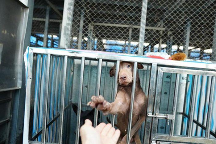 ... mạng xã hội ở Đào Viên, Đài Bắc đăng tải những hình ảnh xúc động về một  chú chó cơ nhỡ, khiến rất nhiều người thương cảm, không kìm được nước mắt.