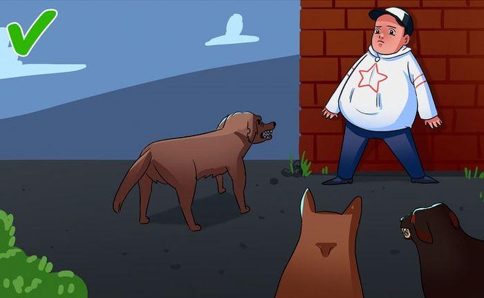 Bạn cần làm gì khi bị chó tấn công?