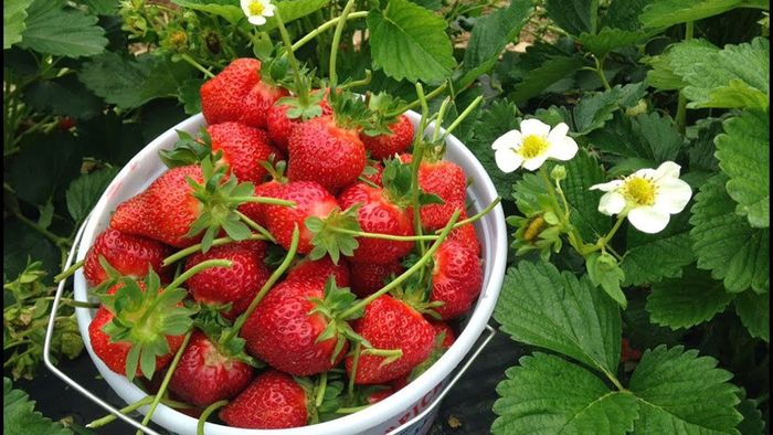 10 loại trái cây giúp dưỡng ẩm da hiệu quả trong mùa đông 10 loại trái cây giúp dưỡng ẩm da hiệu quả trong mùa đông
