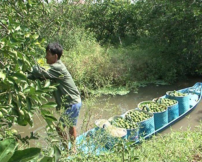 Báo VOV: Nông dân Hậu Giang làm giàu với mô hình làm nông thông minh