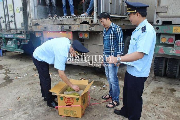 Báo Hải Quan: Hải quan Lạng Sơn: Trực làm việc 24/24 hỗ trợ cho vải quả XK