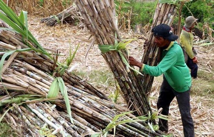 Báo VietnamPlus: Casuco lên phương án đóng cửa Nhà máy đường Vị Thanh ở Hậu Giang