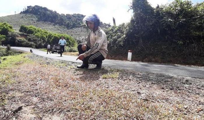 Báo GTVT: Kon Tum: Đơn vị quản lý phát quang đường bằng thuốc diệt cỏ