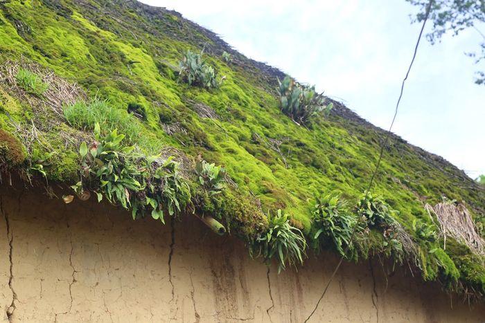 """Kết quả hình ảnh cho Vẻ đẹp những ngôi """"nhà nấm"""" mái cỏ rêu xanh còn lại trên vùng cao Bát Xát"""