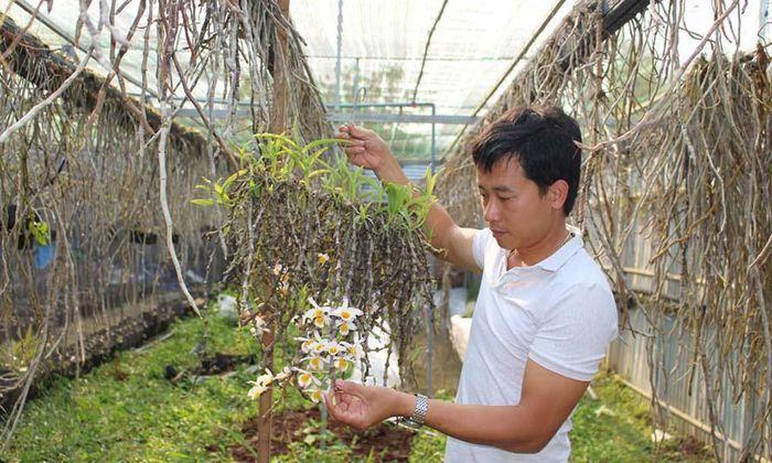 Khu vườn 10.000 giò làn rừng, gia tài bạc tỷ của thầy giáo trẻ